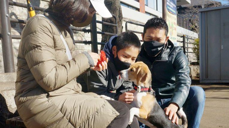 Adoção de pets dispara em meio a pandemia