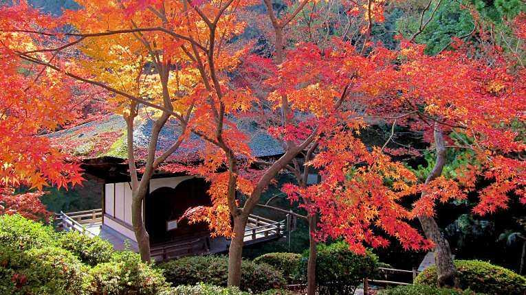 Jardim Momijidani no outono