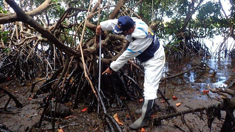 Petróleo sendo retirado de mangue nas Ilhas Maurício
