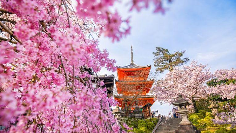 Florescer das sakuras em 2021