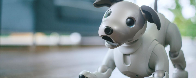 Pet robô no Japão