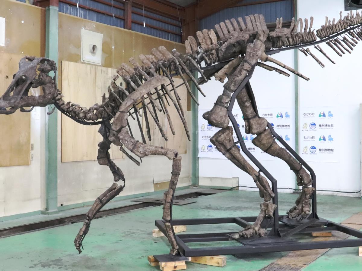 Nova espécie de dinossauro é descoberto no Japão