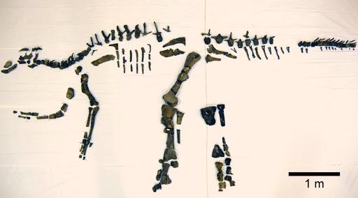 Fosseis de dinossauro encontrado em Awaji