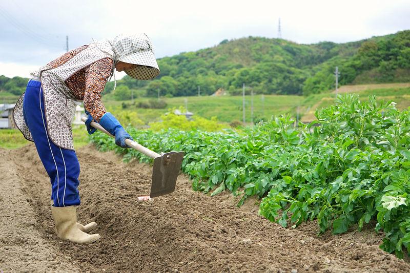 Agricultura no Japão sofre com envelhecimento da população