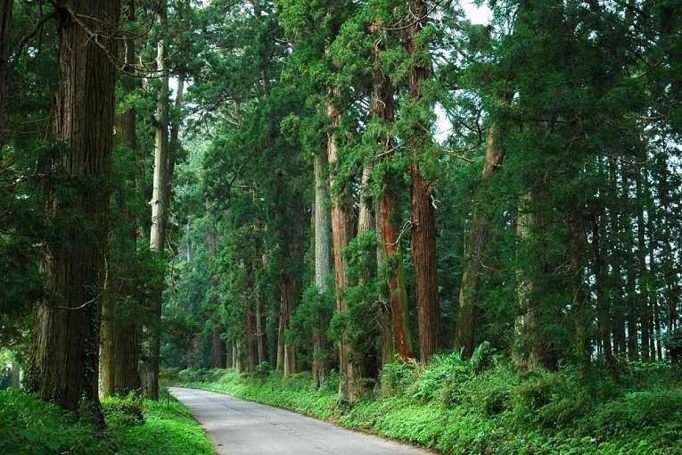 Trecho preservado da estrada Nikkō Kaidō em meio a natureza japonesa