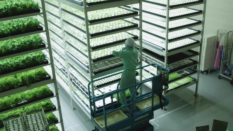 Fazenda vertical no Japão é tendência para futuro