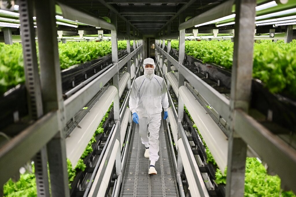 Funcionário anda entre prateleiras de pés de alface em fazenda vertical no Japão